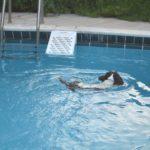 skamper-ramp-cavalier-escape-piscina