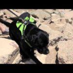 arnes-perro-crazy-paws-013-mismascotas