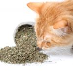 catnip-seco-gatos-2