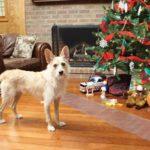 arbol-navidad-perro-alfombra-electorstatica