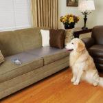 alfombra-electrostatica-scatmat-perro