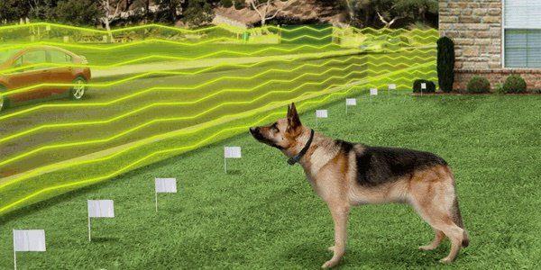 Cerco invisible para perros