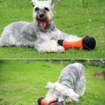hueso-rellenable-schnauzer-crazy-paws