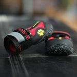 zapato-rojo-perro-pompreece